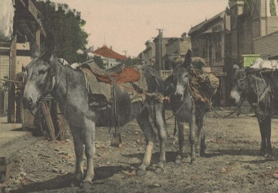 Three mules with saddles standing on a dirt road in a western town